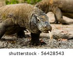 two komodo dragons  one showing ... | Shutterstock . vector #56428543