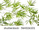 bamboo leaves isolated on white ... | Shutterstock . vector #564326101