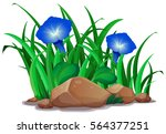 blue morning glory in the... | Shutterstock .eps vector #564377251