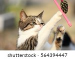 Stock photo wild cat playing with a toy 564394447