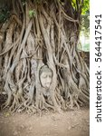 Head Of Buddha In The Tree ...