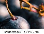 ripe dark grape close up....
