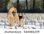 Small photo of female dog and puppy airedale standing in the snow