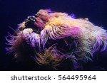 Amazing Marine Animals Closeup...