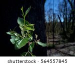 new green growth on the side of ... | Shutterstock . vector #564557845