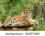 bengal tiger | Shutterstock . vector #56457484