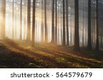 tree silhouettes in a dark... | Shutterstock . vector #564579679