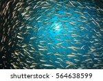 Fish School Snapper Fish...
