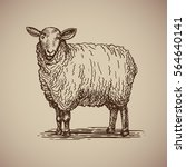 Sheep In Sketch Style. Vector...