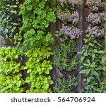 vertical herb garden in an...   Shutterstock . vector #564706924