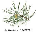 Twig Of Pine
