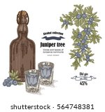 juniper tree and old bottle gin ... | Shutterstock .eps vector #564748381