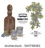 juniper tree and old bottle gin ...   Shutterstock .eps vector #564748381