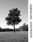 Small photo of isolated huge tree in huge field of grass, black and white