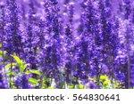 Lavender Background. Lavender...