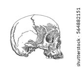 monochrome anatomic drawing of...   Shutterstock .eps vector #564882151