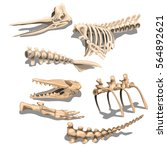the set of parts of skeletons... | Shutterstock .eps vector #564892621