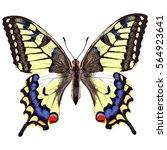 Realistic Swallowtail Butterfly ...