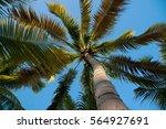 palm tree    | Shutterstock . vector #564927691