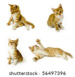 Stock photo sitting red cats isolated on white background 56497396