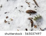 sticks and pine cones on a... | Shutterstock . vector #565037497