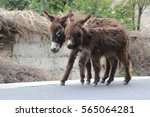 Two Donkey Walking Together
