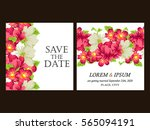 vintage delicate invitation... | Shutterstock . vector #565094191