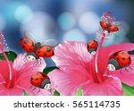 Many Ladybugs On Pink Flowers...