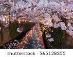 Sakura Festival  Cherry Blosso...