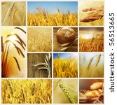 Wheat.harvest Concepts.cereal...