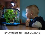 Boy Is Watching Fish Tank In...