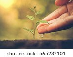 hand watering a young baby... | Shutterstock . vector #565232101
