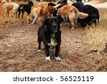 Stock photo a small dog stands apart from the pack 56525119