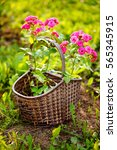 Decorative Wicker Basket With...