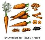 carrot hand drawn illustration... | Shutterstock . vector #565377895