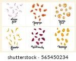 set of fruit illustrations ... | Shutterstock .eps vector #565450234