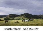 Billings  Montana  Usa. Horses...
