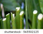 Stalks Of Flowers   The Stem O...