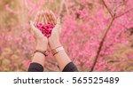 Cherry Blossom Heart Shape In...