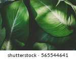 Low Key Green Leafs Dark Natur...