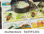 stamp collecting. philatelic.... | Shutterstock . vector #565591201