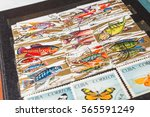 stamp collecting. philatelic.... | Shutterstock . vector #565591249