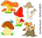 Collection Of Forest Mushrooms...