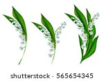the branch of lilies of the... | Shutterstock . vector #565654345