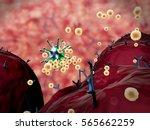 3d illustrations of virus and... | Shutterstock . vector #565662259