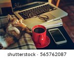 Stock photo relax time two sleep cat red cup coffee with laptop and tablet eyeglasses 565762087