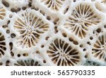 coral texture macro photo.... | Shutterstock . vector #565790335