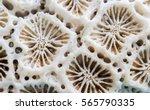 Coral Texture Macro Photo....