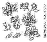 hand drawn spring magnolia...   Shutterstock . vector #565847227