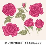 pink rose flowers and leaves in ... | Shutterstock . vector #565851139